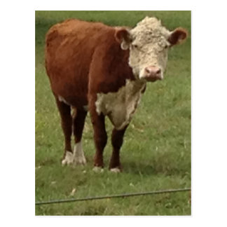 Hereford Cow says Hello Postcard