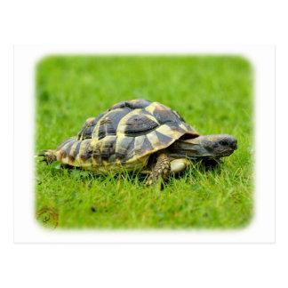 Hermans Tortoise 9W027D-069 Postcard