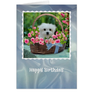 Hermes the Maltese Birthday Card