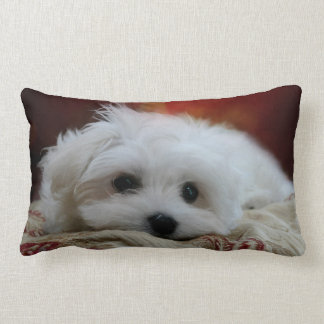 Hermes the Maltese Pillow
