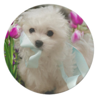 Hermes the Maltese Plate
