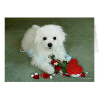 Hermes the Maltese Valentine Card