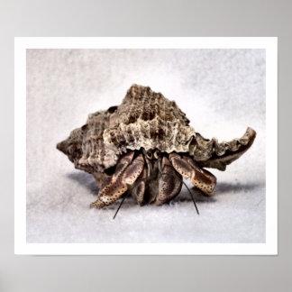 Hermit crab #1 poster