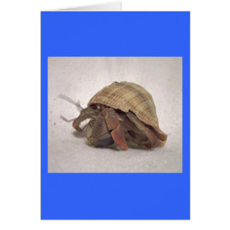 Hermit Crab #8 Card
