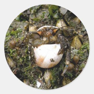 Hermit Crab on Unalaska Island Round Sticker