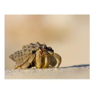 Hermit Crab on white sand beach of Isla Carmen, Postcard