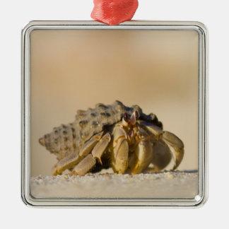 Hermit Crab on white sand beach of Isla Carmen, Silver-Colored Square Ornament