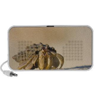 Hermit Crab on white sand beach of Isla Carmen, iPod Speakers