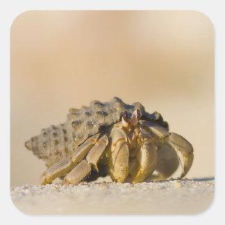 Hermit Crab on white sand beach of Isla Carmen, Square Sticker