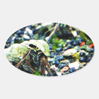 Hermit Crab Oval Sticker