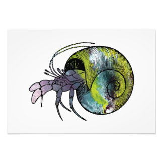 Hermit Crab Photo Print