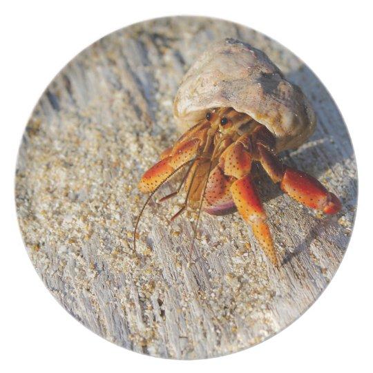 Hermit Crab Plate