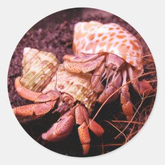 Hermit Crabs Sticker