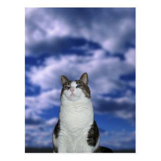 Heroic Cat Postcard