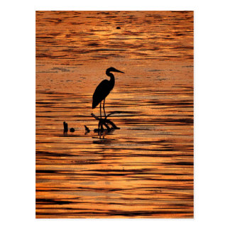 Heron at Sunset Postcard