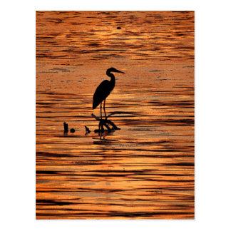 Héron au coucher du soleil cartes postales