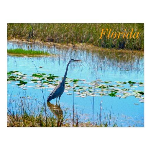 Héron bleu carte postale dans clairières - la Flor