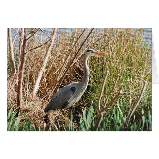 Heron Enjoying Sunshine Card