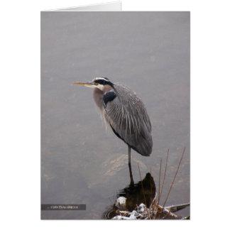 Heron Facing the Storm Card