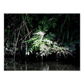 Heron in disguise poster