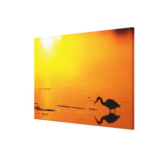 Heron silhouette at sunset, Florida Canvas Print