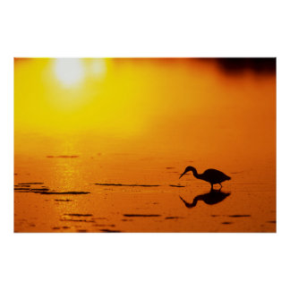 Heron silhouette at sunset, Florida Poster