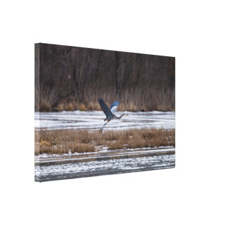 Heron Take Off Canvas Print