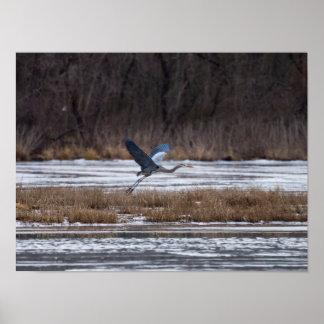 Heron Take Off Poster