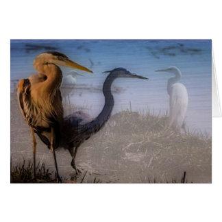 Herons Note Cards