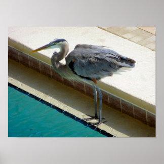 Heron's Water Bowl Poster