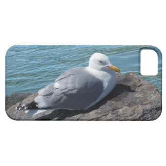 Herring Gull on Rock Jetty Case For The iPhone 5