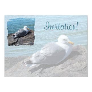 Herring Gull Resting on Rock Jetty: Card
