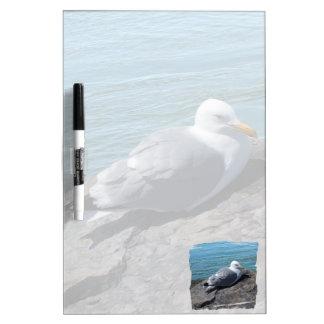 Herring Gull Resting on Rock Jetty: Dry Erase Board