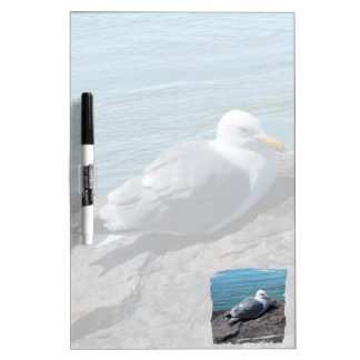 Herring Gull Resting on Rock Jetty: Dry-Erase Boards