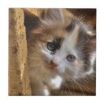 Heterochromia Calico Kitten Ceramic Tiles