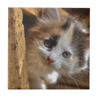 Heterochromia Calico Kitten Tile