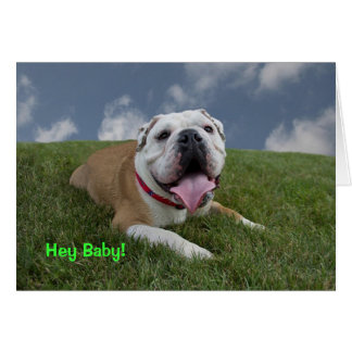 Hey Baby!  Bulldog Birthday Card