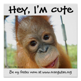 Hey, I'm Cute Baby Orangutan Poster