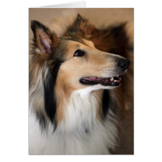 Hey there! Collie Card
