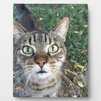 """Hey You"" says this cat Plaque"