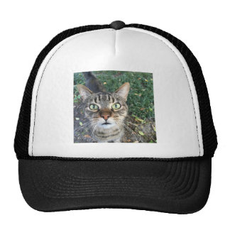 """""""Hey You"""" says this cat Trucker Hat"""