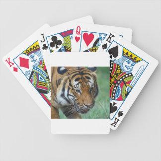 Hi-Res Malay Tiger Close-up Bicycle Playing Cards