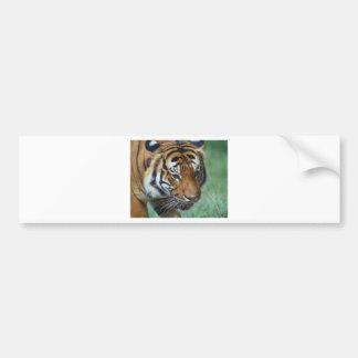 Hi-Res Malay Tiger Close-up Bumper Sticker