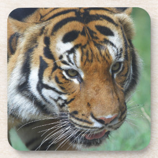 Hi-Res Malay Tiger Close-up Coaster