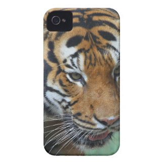 Hi-Res Malay Tiger Close-up iPhone 4 Case-Mate Case