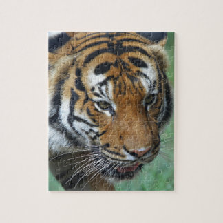 Hi-Res Malay Tiger Close-up Jigsaw Puzzle