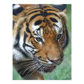 Hi-Res Malay Tiger Close-up Letterhead