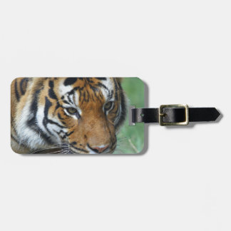 Hi-Res Malay Tiger Close-up Luggage Tag
