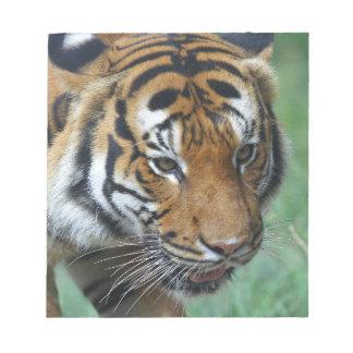 Hi-Res Malay Tiger Close-up Notepads