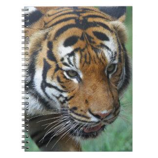 Hi-Res Malay Tiger Close-up Spiral Notebook